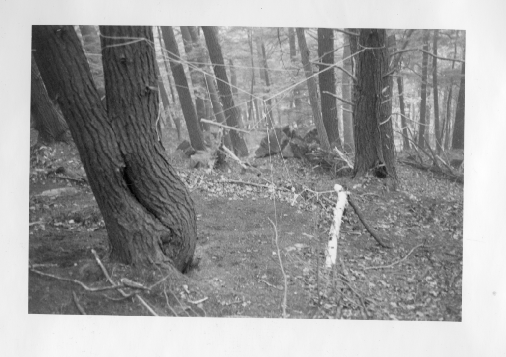 One of Sam Amber's art installations in the woods.
